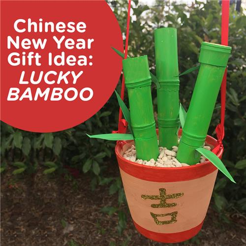 Chinese New Year Gift Lucky Bamboo Chinese New Year