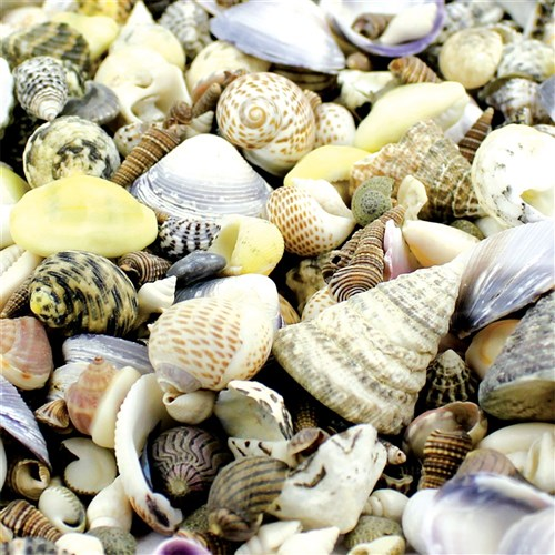 Small Sea Shells 1kg Pack General Collage
